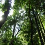 Die Luft im Regenwald ist klar und reich an Sauerstoff