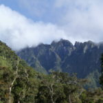 Über dem Regenwald bilden sich Wolken, weil das verdunstete Wasser der Bäume kondensiert
