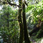 Auf schmalen Pfaden kann unser Regenwald begangen werden