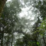 """Ein """"schwitzender"""" Regenwald gibt große Mengen Wasser an die Atmosphäre ab"""