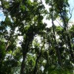 Die verschiedenen Etagen eines Regenwaldes - Vielfalt auf mehreren Ebenen