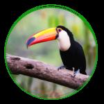 Regenwald / Rainforest-Save - Tierwelt
