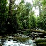 Entlang von Flüssen im Regenwald findet sich meist üppige Vegetation