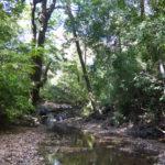 Ein Bach mit kleinem Wasserfall auf unserem Grundstück